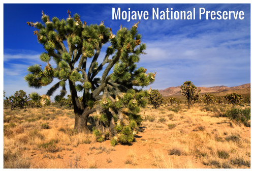 Mojave National Preserve Ca June Weather Forecast And
